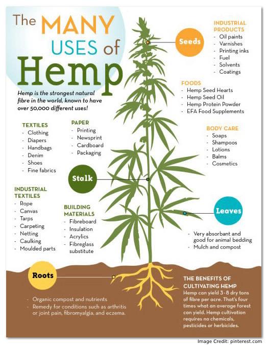 Uses of Hemp Info
