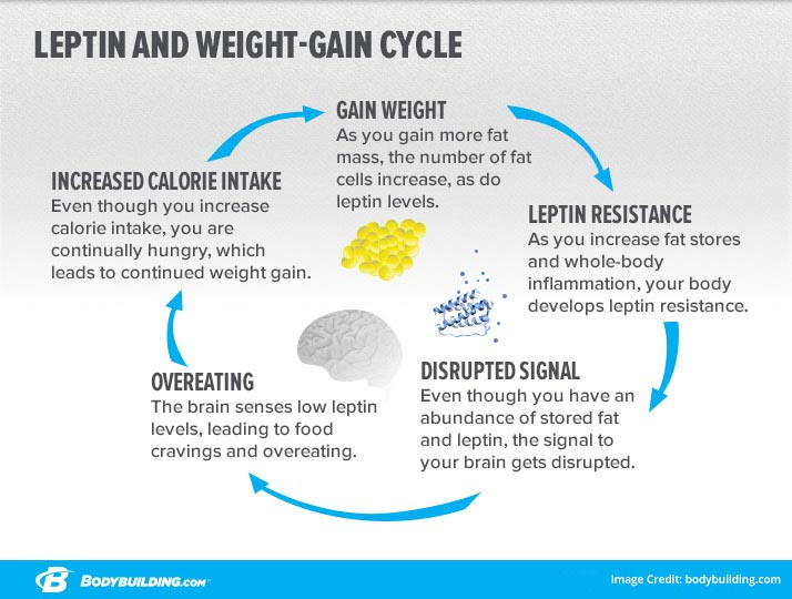 What Is Weight Cycling