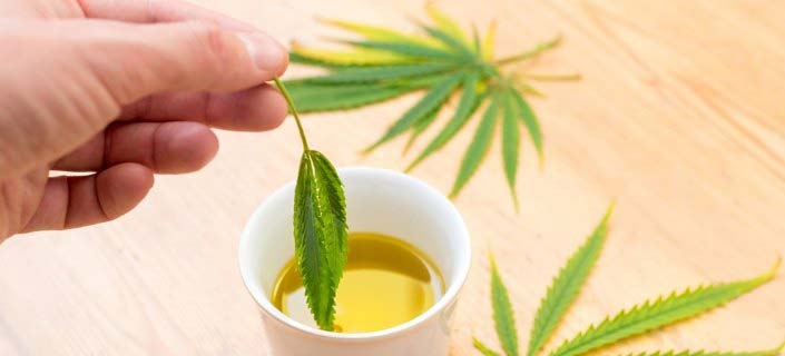 Prepare Cannabis Oil At Home To Reap Its Benefits