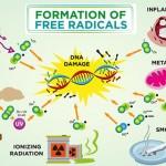 How Free Radical Damage Causes Dark Circles