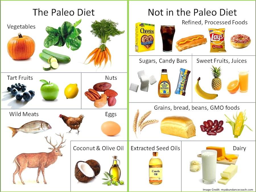 Paleo Diet3 Info