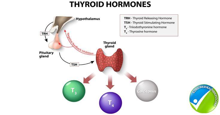 Thyroid hormone