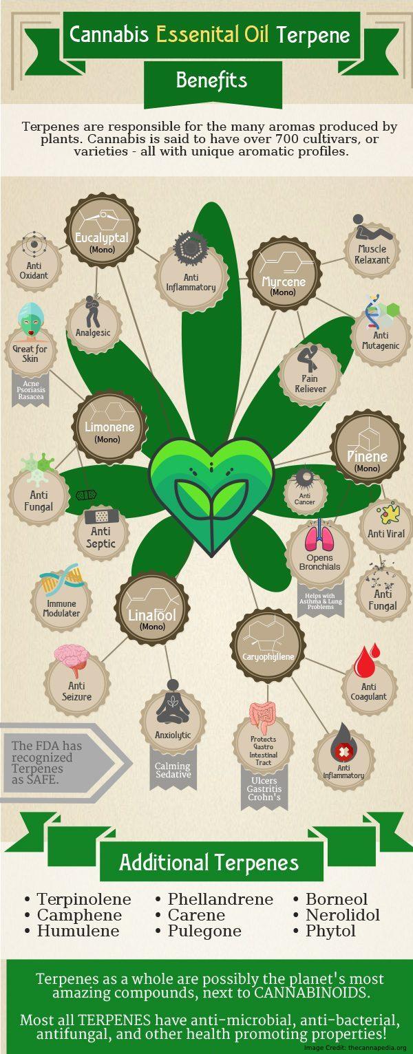 Cannabis essential oil info