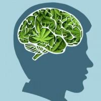 Endocannabinoid