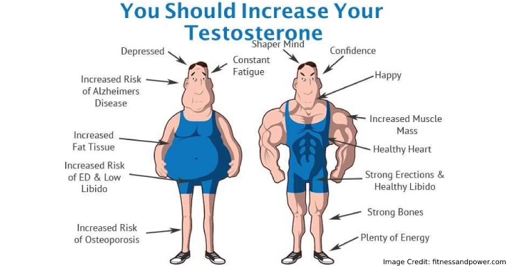 increase* your testosterone