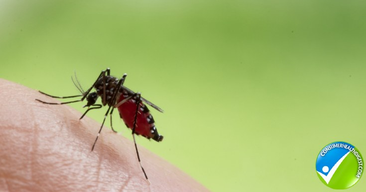 Mosquito Borne Infection