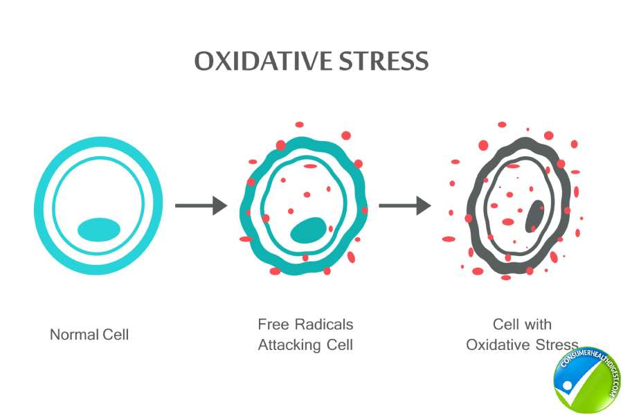 What Is Oxidative Damage