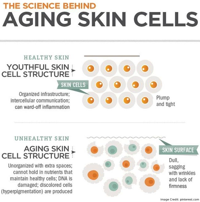 Aging Skin Cell Info