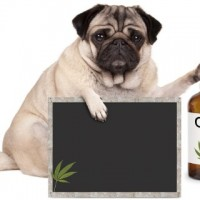 cbd oil for dogs other pets