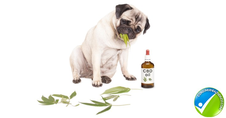 CBD Works in your Pets
