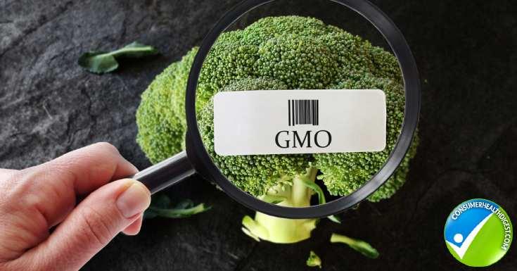 Examining Broccoli Gmo