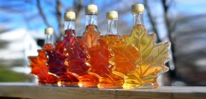 Maple Syrup Extract