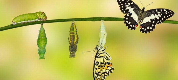 Transformation And Destination