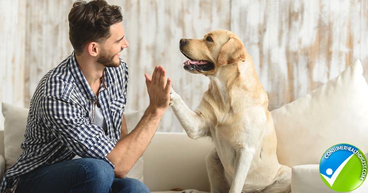 Provides companionship