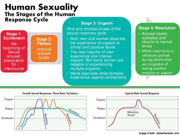 Human Sexual Info