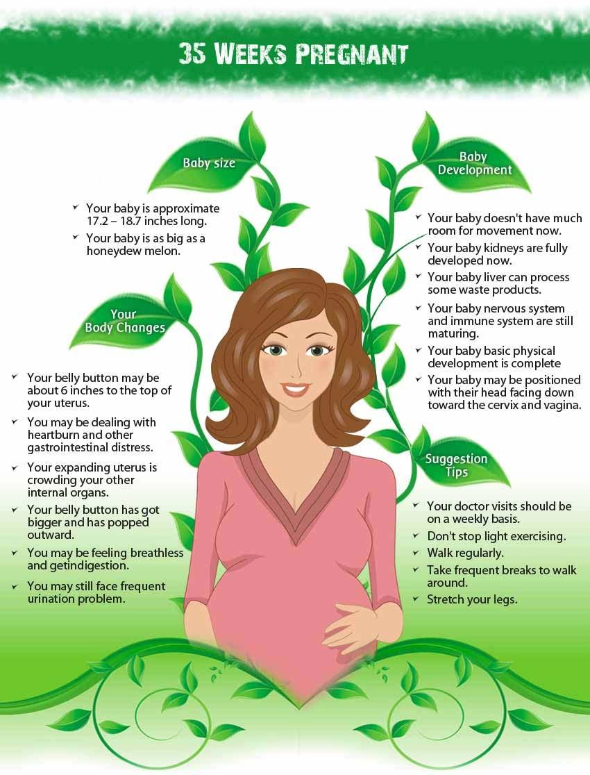 Info 35 weeks pregnant