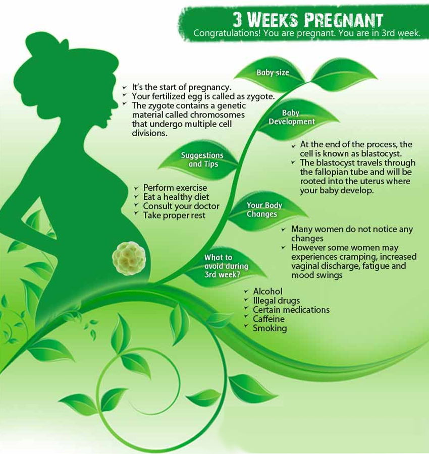 3 Weeks Pregnant: What Happens, Physical Changes, Fetal